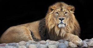 RUAY ฝันเห็นสิงโต ราชสีห์แห่งพงไพร พร้อมเลขเด็ดสุดรวย